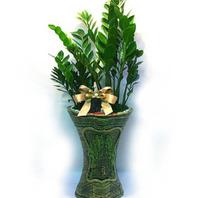 금전수[1](돈나무)